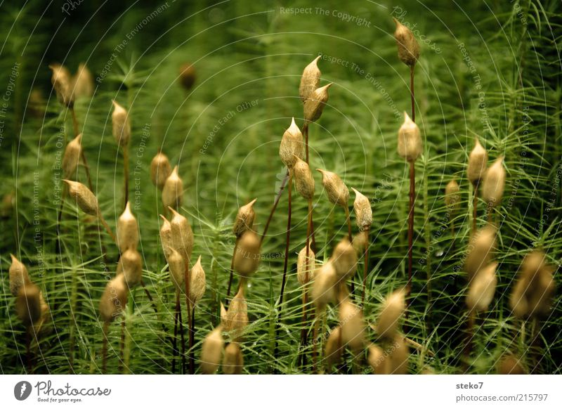 Nature Green Blossom Grass Landscape Brown Esthetic Growth Blossoming Moss Thorny