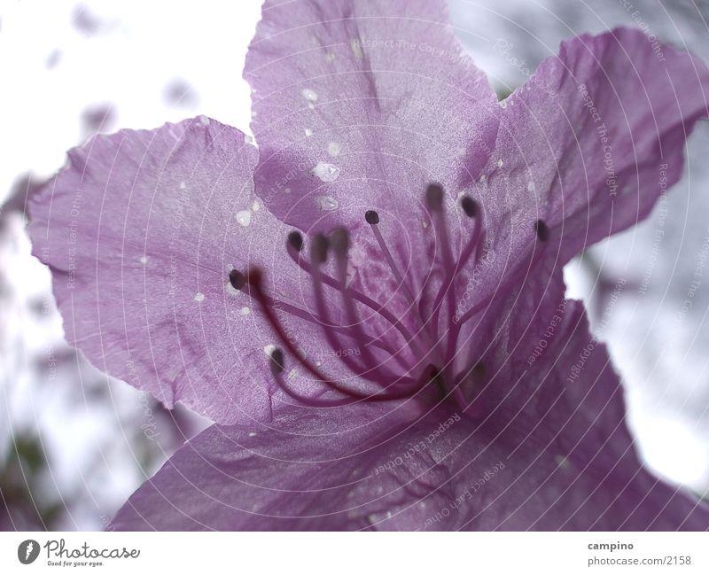 Spring Detail Blossom Pink Violet Park