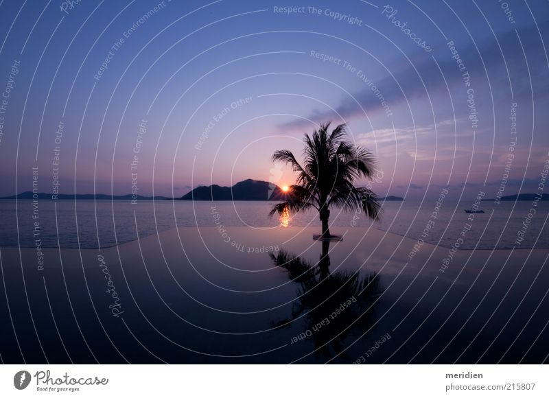 Tropical Sunrise Sky Blue Beautiful Tree Vacation & Travel Relaxation Landscape Happy Moody Horizon Natural Tourism Wellness Infinity Beautiful weather Peace