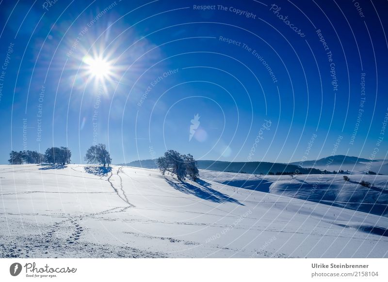 Black Forest winter Vacation & Travel Tourism Winter Snow Winter vacation Mountain Environment Nature Landscape Plant Air Cloudless sky Beautiful weather Ice