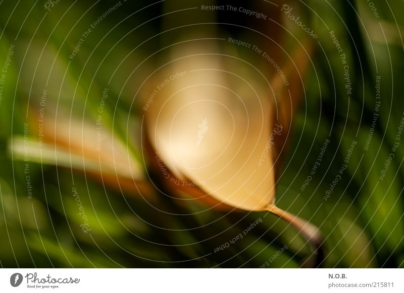 Nature Green Plant Leaf Meadow Autumn Emotions Moody Brown Environment Gold Esthetic Natural Serene Abstract Attentive