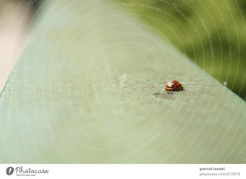 [HH01] without title Environment Animal Wild animal Beetle Ladybird Crawl Blur Point Insect Colour photo Subdued colour Exterior shot Close-up Copy Space left