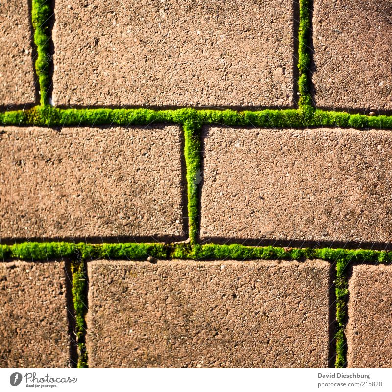 Moody times Nature Plant Moss Foliage plant Brown Green Stone Paving stone Rectangle Network Connection Grid Line Weed Colour photo Multicoloured Exterior shot
