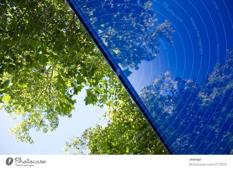 Nature Beautiful Blue Tree Leaf Colour Above Emotions Style Trip Crazy Fresh Esthetic Perspective Change Exceptional