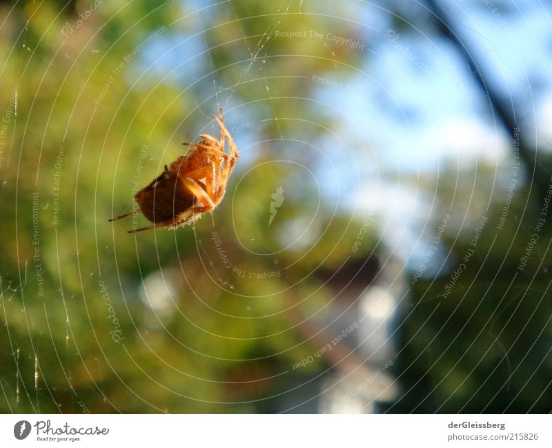 Nature Green Blue Red Legs Brown Small Bushes Threat Creepy Wild animal Fat Disgust Beautiful weather Spider Crawl
