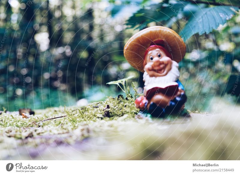 Garden gnome in the forest Nature Plant Moss Foliage plant Forest Hiking Dwarf Colour photo Exterior shot Close-up Day