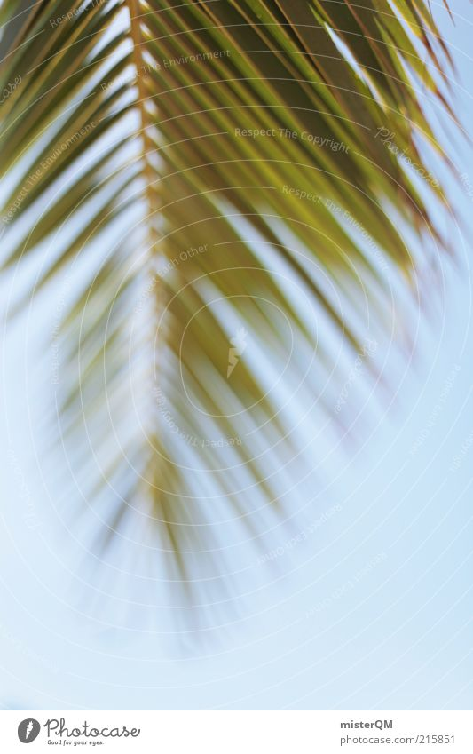 Sky Nature Green Vacation & Travel Plant Summer Relaxation Environment Weather Contentment Climate Adventure Esthetic Beautiful weather Hot Palm tree