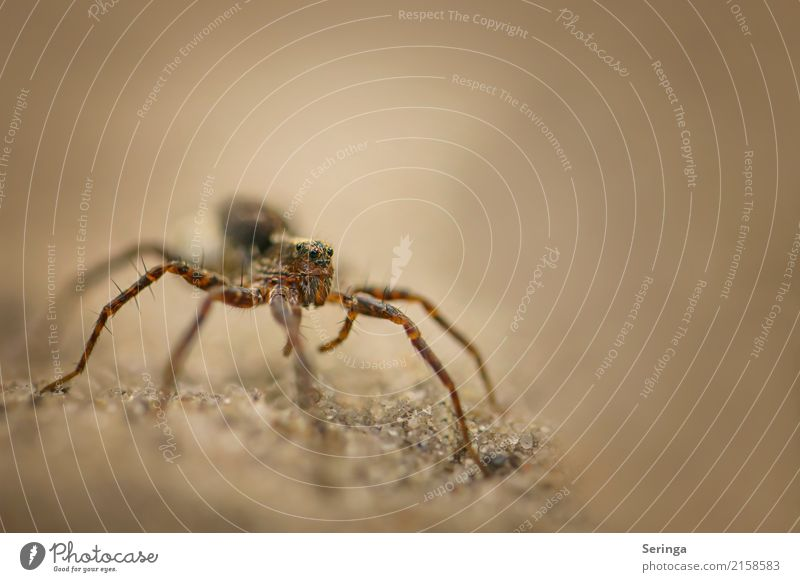 crawling wolf spider Environment Nature Landscape Plant Animal Grass Garden Park Meadow Forest Virgin forest Wild animal Spider Animal face 1 Crawl Wolf spider