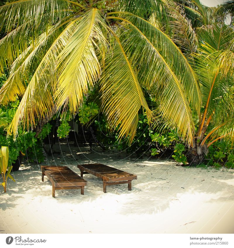 Summer Beach Vacation & Travel Relaxation Island Idyll Palm tree Sunbathing Exotic Maldives Paradise Deckchair Summer vacation Lesser Antilles Greater Antilles Tropical