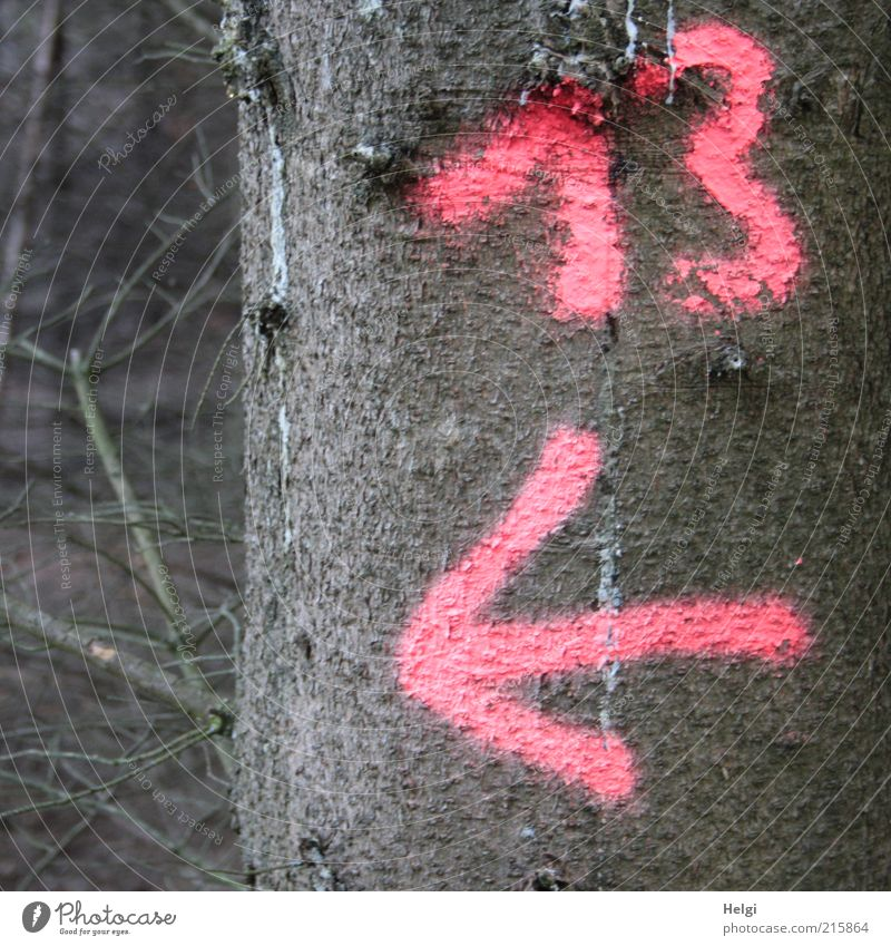 Nature Tree Plant Forest Environment Wood Brown Pink Signs and labeling Natural Growth Exceptional Uniqueness Digits and numbers Transience Dry
