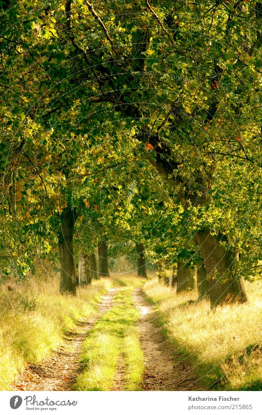 Nature Plant Green Tree Landscape Leaf Forest Yellow Autumn Grass Lanes & trails Wood Bright Brown Weather Illuminate