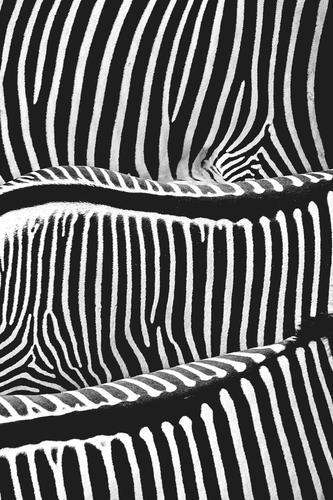 spine Style Design Hair and hairstyles Vacation & Travel Trip Safari Nature Animal Wild animal Zoo Zebra Zebra crossing Pelt Stripe Striped sweater