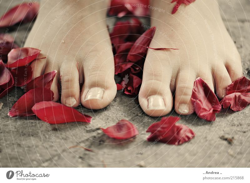 Red Calm Relaxation Life Feet Young woman Contentment Lie Rose Wellness Well-being Fragrance Massage Harmonious Flower Barefoot