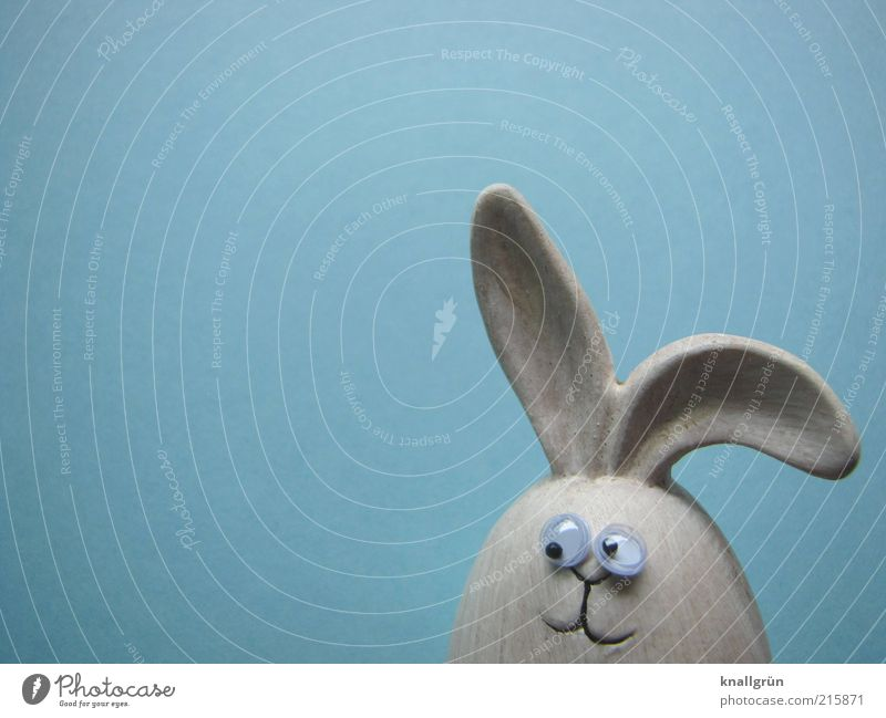 My name is Hase Animal Animal face Hare & Rabbit & Bunny 1 Observe Looking Friendliness Blue Gray Emotions Joy Expectation happy easter Easter Easter Bunny