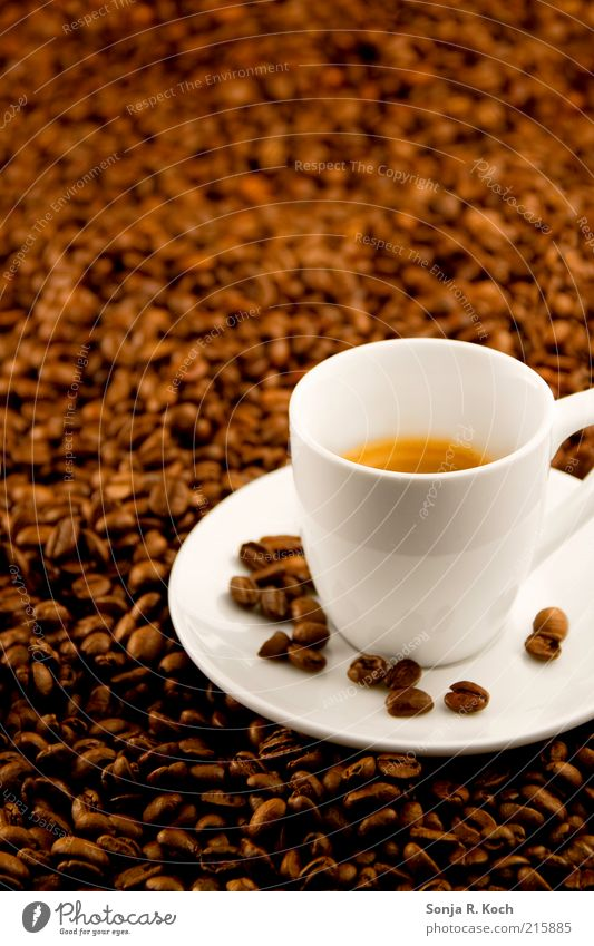 White Brown Beverage Coffee Break Drinking Pure Fluid Crockery Delicious Fragrance Cup To enjoy Thirst Espresso