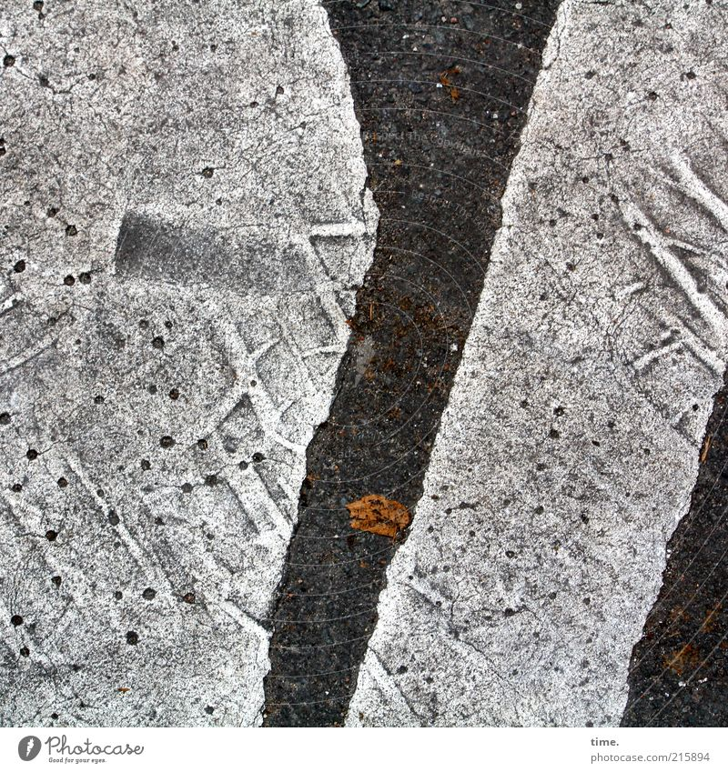 [HH10.1] - Lifelines #18 Leaf Road traffic Street Line Hot Gray Colour Asphalt Dye Imprint Impression Tire tread Floor covering Pavement Molten Tar Footprint
