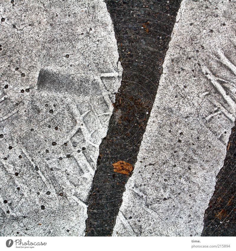 Leaf Street Colour Gray Dye Line Floor covering Gloomy Asphalt Hot Footprint Tire tread Pavement Tar Road traffic