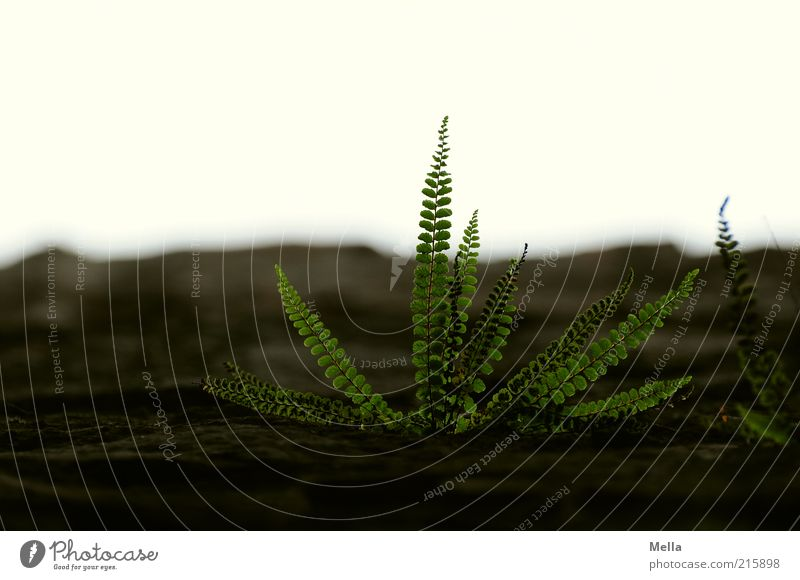 Nature Plant Leaf Power Environment Time Growth End Transience Natural Sustainability Fern Foliage plant Flourish