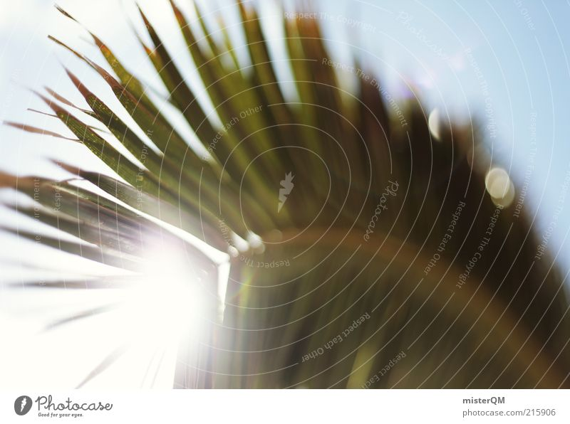 Sunshine Feeling. Nature Plant Esthetic Contentment Palm tree Palm frond Palm beach Vacation & Travel Vacation mood Vacation photo Vacation destination Summer