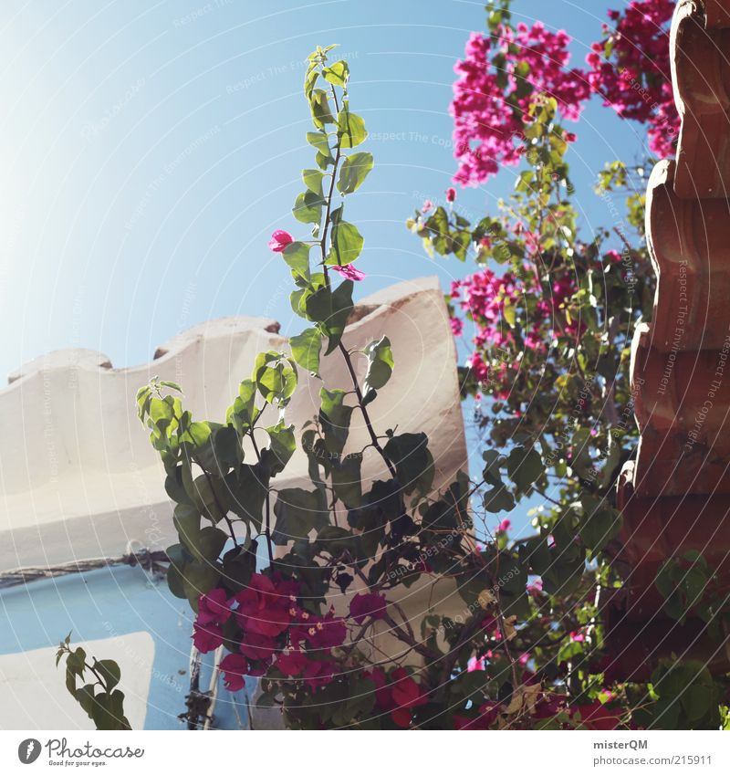 Idyll. Esthetic Section of image Mediterranean Vacation & Travel Vacation mood Vacation photo Vacation destination Alley Garden Romance Hidden Blue South