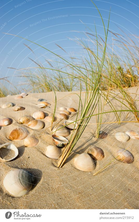 Search for mussels Vacation & Travel Tourism Summer Summer vacation Island Nature Sky Cloudless sky Beautiful weather Wind Plant Coast Beach Sand Mussel