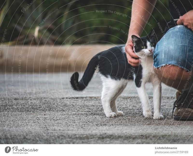 cat talk Playing Human being Masculine Man Adults Friendship Body Hand Legs 1 Environment Animal Garden Pet Cat Animal face Pelt Paw Stroke Fragrance cat's tail