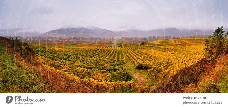 Panorama of Wachau valley. Colorful autumn in vine yards Sky Nature Plant Green Landscape Tree Red Leaf Clouds Mountain Yellow Autumn Garden Tourism Rain Fruit