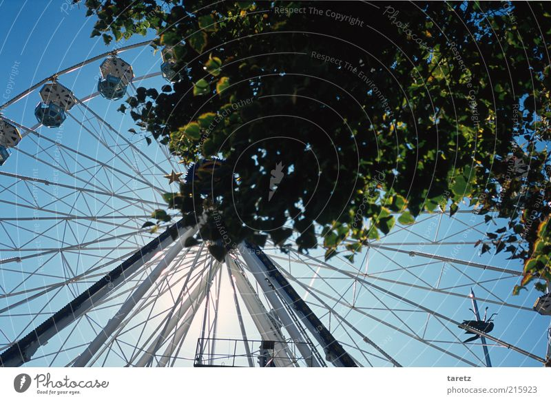 Wheel of Fortune Tree Joy Leaf Time Empty Round Fairs & Carnivals Marketplace Blue sky Prop Ferris wheel Twigs and branches Massive Belgium Theme-park rides