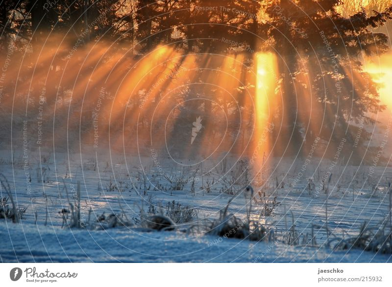 Kitsch in the winter forest Sunlight Winter Climate Climate change Ice Frost Snow Meadow Forest Esthetic Exceptional Bright Cold Natural Warmth Romance Nature