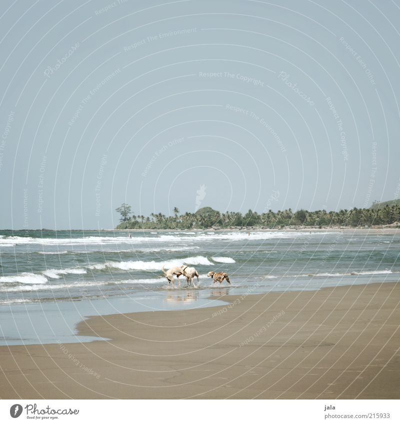 living in the wild Vacation & Travel Adventure Summer Beach Ocean Waves Nature Landscape Sky Plant Tree Exotic Palm tree India Asia Goa Animal Dog 3 Pack Joy