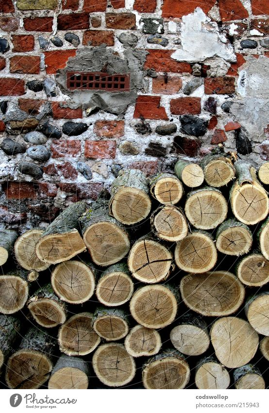 Winter Autumn Wall (building) Energy Facade Change Living or residing Brick Agriculture Decline Climate change Forestry Rural Old building Old fashioned Supply