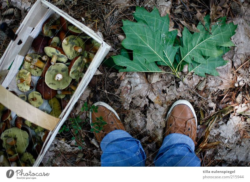 Human being Nature Leaf Environment Autumn Feet Earth Footwear Leisure and hobbies Trip Stand Search Jeans Collection Mushroom Crate