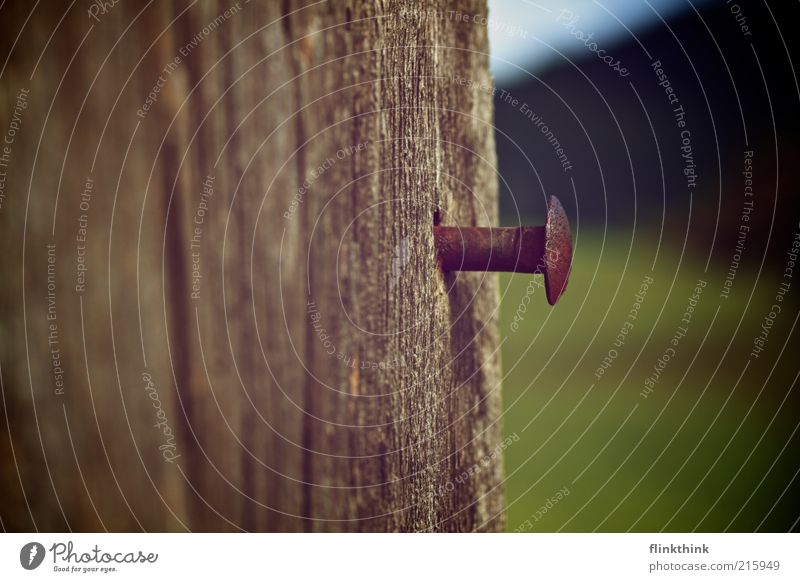A nail with head Environment Summer Wooden board Wooden wall Hill Nail Screw Rust Iron Old Brown Green Thrifty Colour photo Multicoloured Exterior shot Deserted