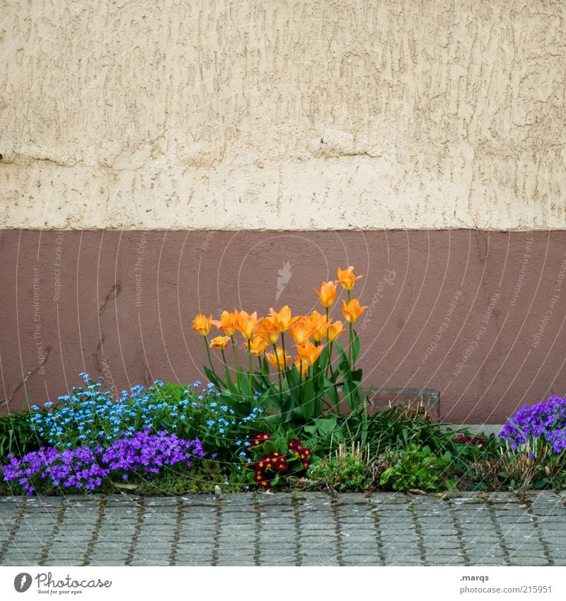 Nature Beautiful Flower Blue Plant Wall (building) Emotions Spring Garden Wall (barrier) Orange Facade Growth Gloomy Living or residing Blossoming