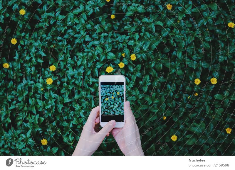 taking photo of flowers on green plant Lifestyle Joy Beautiful Leisure and hobbies Garden Telephone PDA Screen Camera Technology Human being Woman Adults Hand