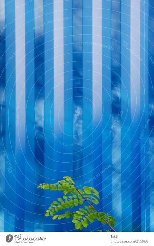 Blue Plant Wall (building) Wall (barrier) Design Elegant Industry Energy industry Esthetic Future Technology Bushes Climate Stripe Infinity Science & Research