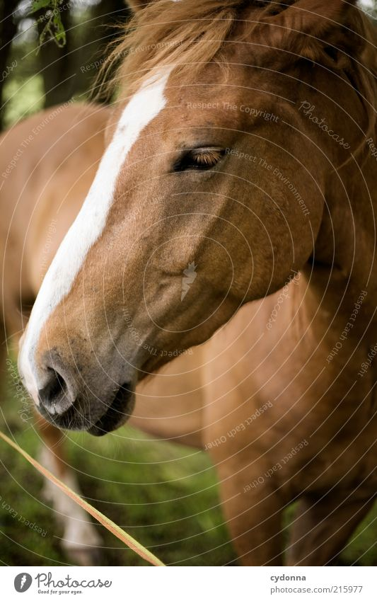 Beautiful Calm Eyes Animal Life Horse Esthetic Near Animal face Uniqueness Pelt Mane Love of animals Nostrils Brownish