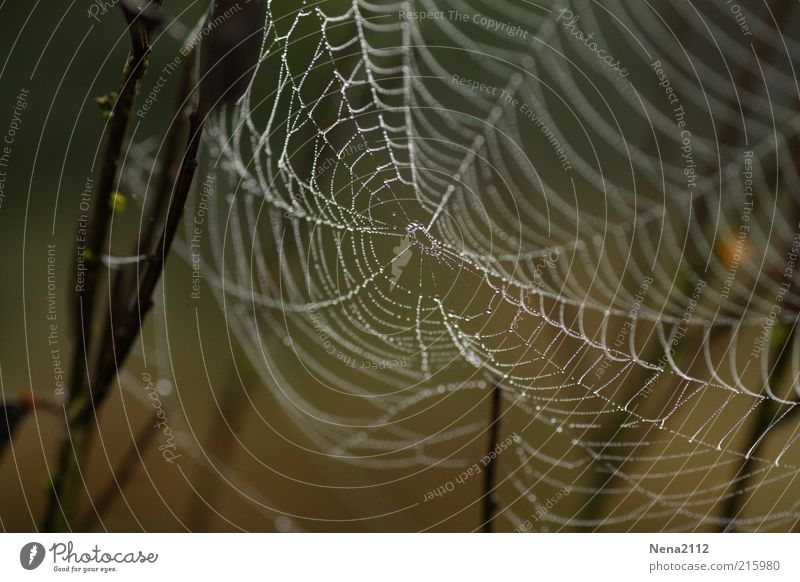 Nature Water White Rain Weather Brown Wet Drops of water Net Damp Easy Dew Spider's web Reticular