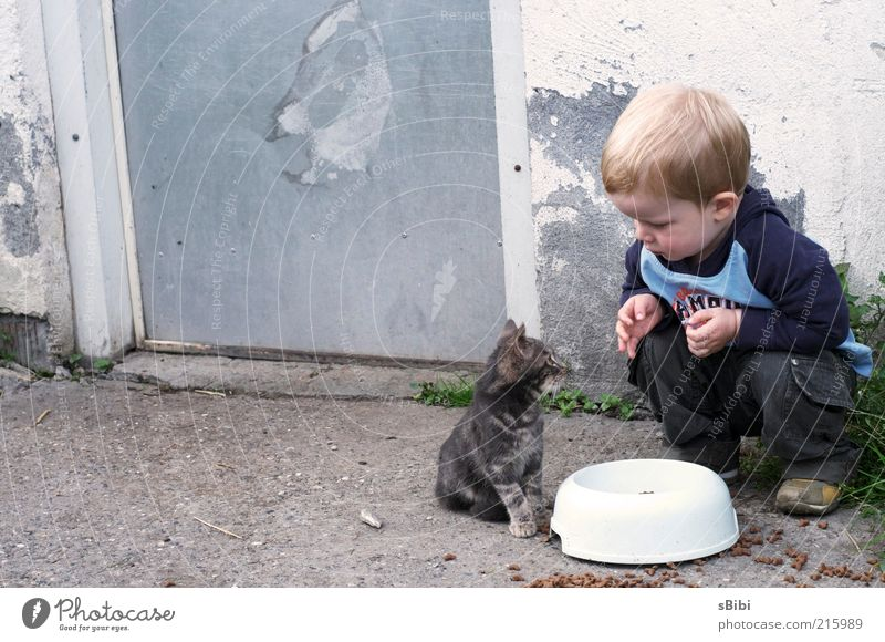 Human being Child Love Animal Boy (child) Playing Cat Friendship Funny Blonde Small Observe Pelt Infancy Curiosity Cute