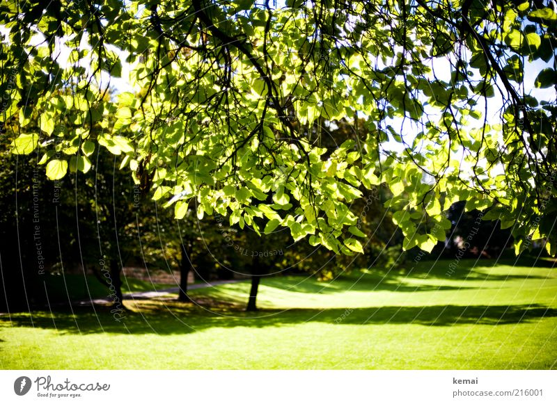 Sky Nature Green Tree Plant Summer Meadow Landscape Environment Grass Bright Park Climate Growth Branch Illuminate