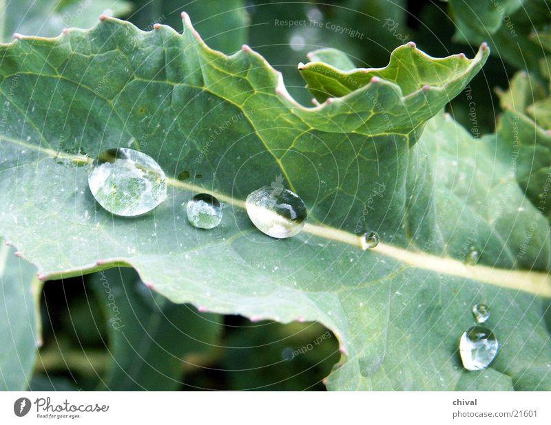 raindrop Leaf Drops of water Water Rain
