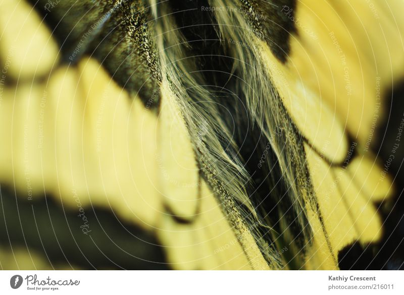 Butterfly back. Animal Wing 1 Esthetic Simple Beautiful Near Natural Positive Soft Yellow Black Nature Symmetry Swallowtail Pattern Colour photo Close-up Detail