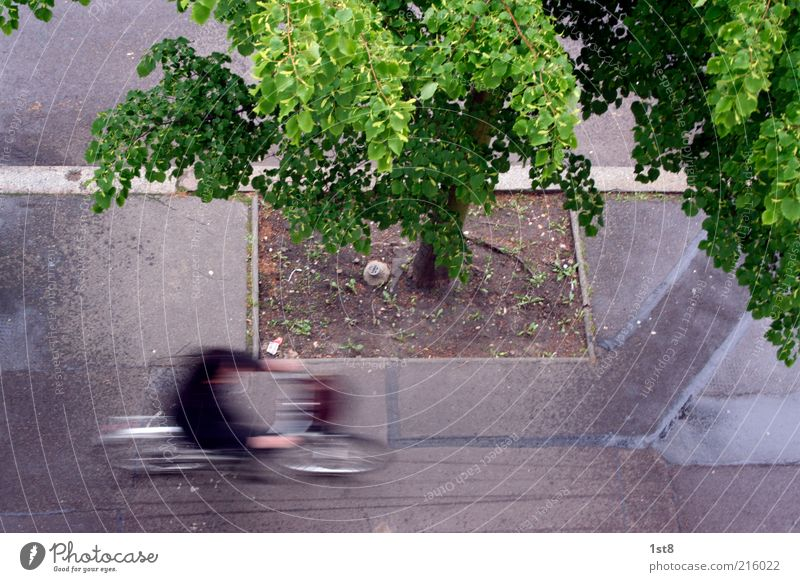 Human being Tree City Bicycle Road traffic Speed Driving Asphalt Dynamics Sidewalk Traffic infrastructure Cycling Haste Curbside