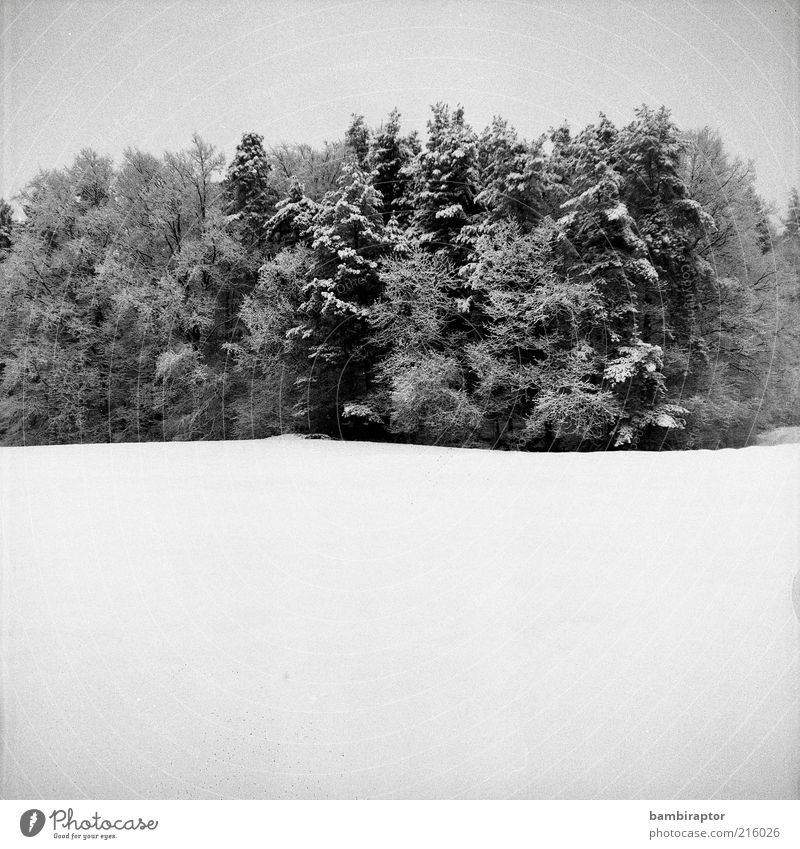 anticipation Nature Landscape Winter Snow Tree Forest Cold Analog Contrast Black & white photo Exterior shot Copy Space bottom High-key Edge of the forest