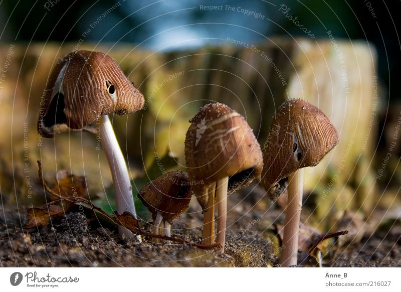 Nature Small Brown Earth Growth Elements Environment Woodground Mushroom cap