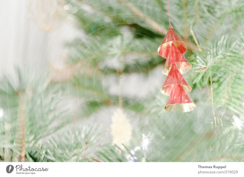 Christmas & Advent Tree Green Red Moody Feasts & Celebrations Gold Christmas tree Decoration Branch Hang Twig Twigs and branches Christmas tree decorations