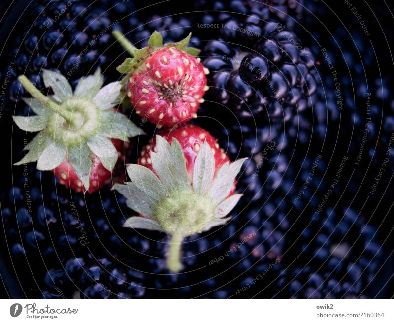 All kinds of sweet things Strawberry Blackberry To enjoy Wait Fresh Healthy Together Glittering Small Near Clean Sweet Green Violet Red Delicious Aromatic