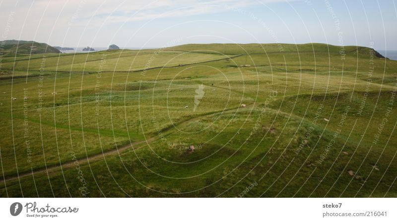 Scottish Coast III Grass Meadow Field Relaxation Infinity Juicy Green Far-off places Pasture Scotland Lanes & trails Colour photo Exterior shot Deserted