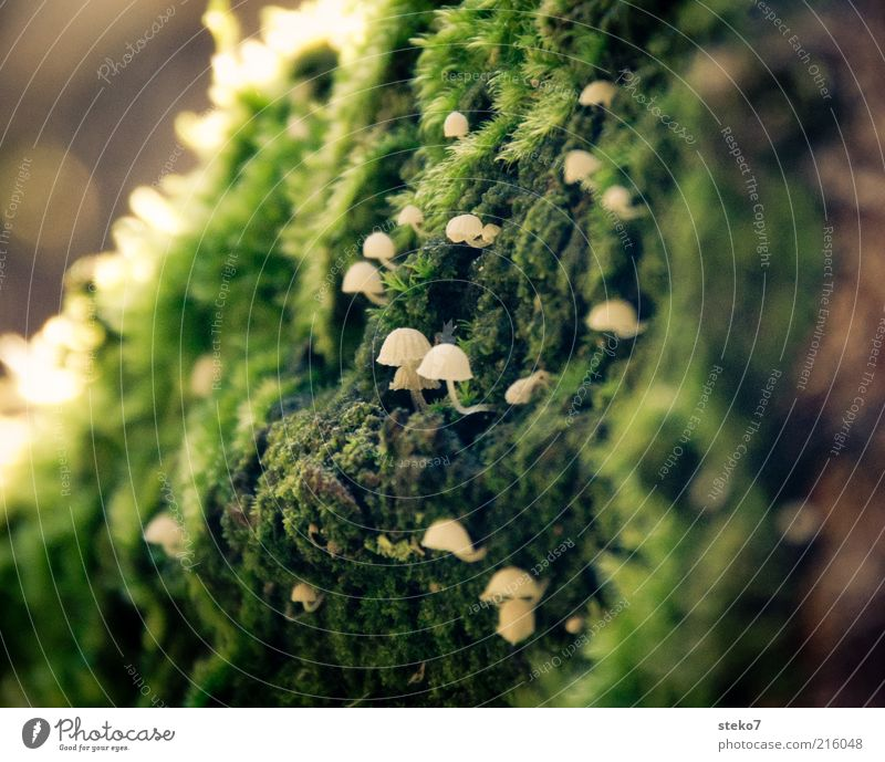 White Green Growth Discover Hide Upward Mushroom Moss Fragile Single-minded Mushroom cap Close-up Diminutive