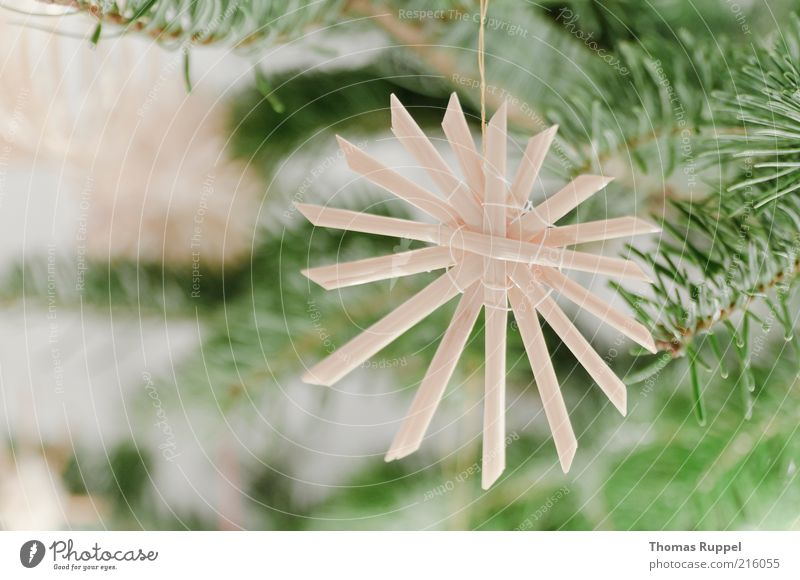 straw jewelry Luxury Living or residing Flat (apartment) Feasts & Celebrations Fir tree Christmas tree Fir branch straw star Christmas decoration Plant Tree